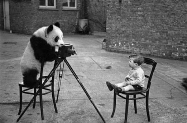 bear taking photo of child
